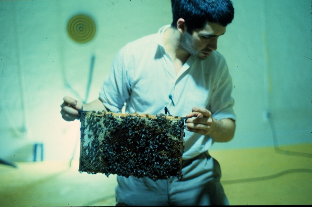 Mike Hentz, Bees, 1981